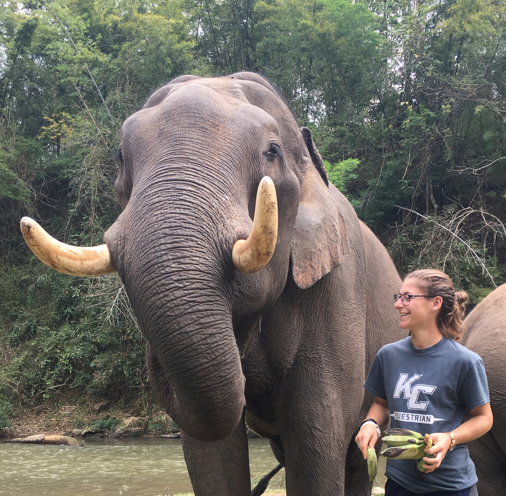 Sarah works with elephants during her Thailand Field Period for Keuka College